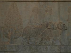 33 - Persepolis