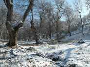 wpid-mntsdcard_ExternalSDDCIMBlog15-Arslanbob-Walnut-forest.JPG.jpg