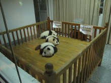 16 - Chengdu - Giant panda breeding center - delivery house