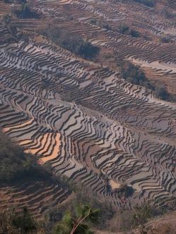 42 - Yuanyang - rice terraces