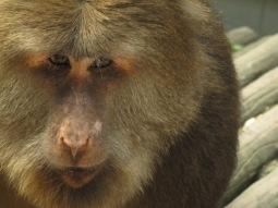 44 - Emei Shan - monkeys area