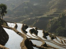 50 - Yuanyang - rice terraces