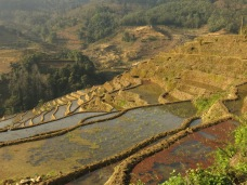 51 - Yuanyang - rice terraces
