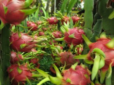 64 - Saigon (Ho Chi Minh city) - dragon fruits