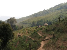 37-Luang Namtha-trekking in the jungle