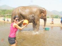 07 - Chiang Mai - Elephant nature park
