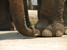 10 - Chiang Mai - Elephant nature park