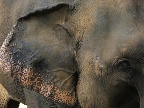 14 - Chiang Mai - Elephant nature park