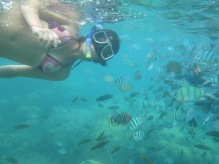 Perhentian islands - snorkelling